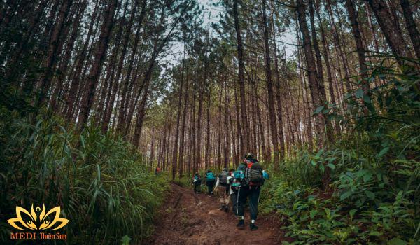 Trekking cực phê cùng medi thiên sơn tại rừng thông