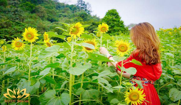 địa điểm nghỉ lễ 30-4- 15 gần Hà Nội MEDI Thiên Sơn, cánh đồng hoa